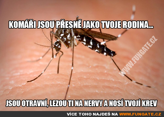 Komáři jsou přesně jako tvoje rodina...