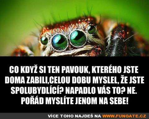 co-kdyz-si-pavouk