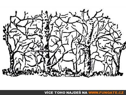 Kolik zvířat vidíš na obrázku?