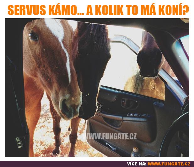 Servus kámo... a kolik to má koní?