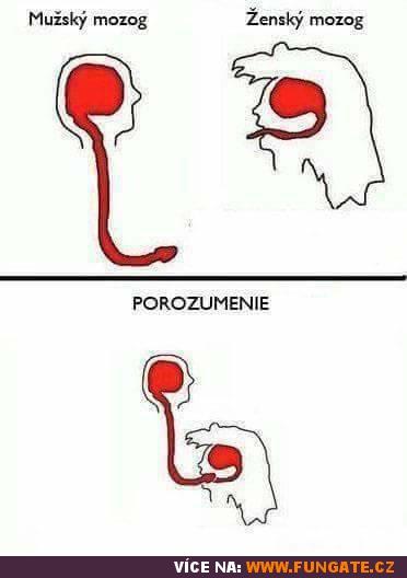 Mužský a ženský mozek